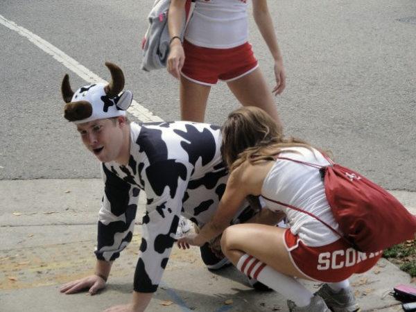 Kurt the Cow Getting Milked